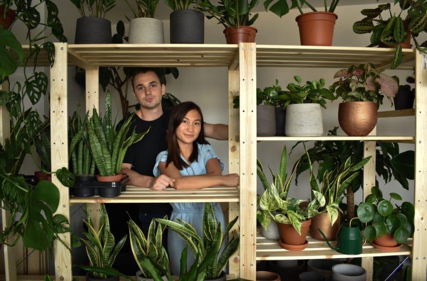 Rostliny, kam se podíváš