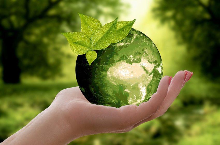 První krůčky k lepšímu životu, aneb Ecoblog